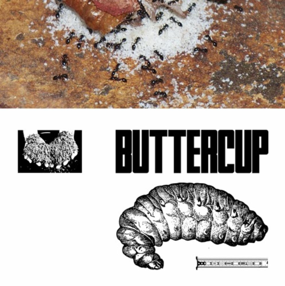 Buttercup w/ Rew